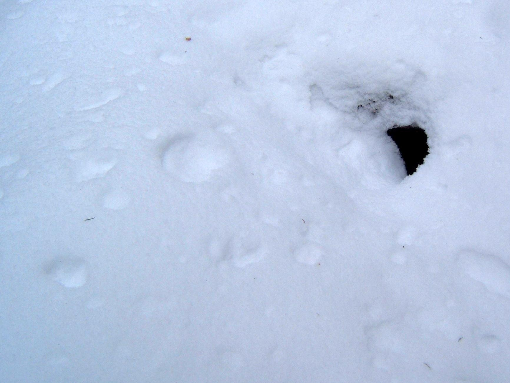 Groundhog Burrow Nichepoetryandprose