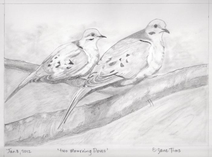'two Mourning Doves'