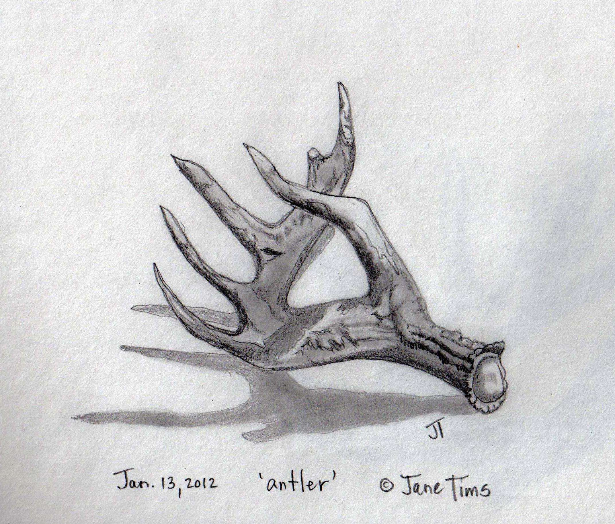 deer antlers drawing easy - photo #20