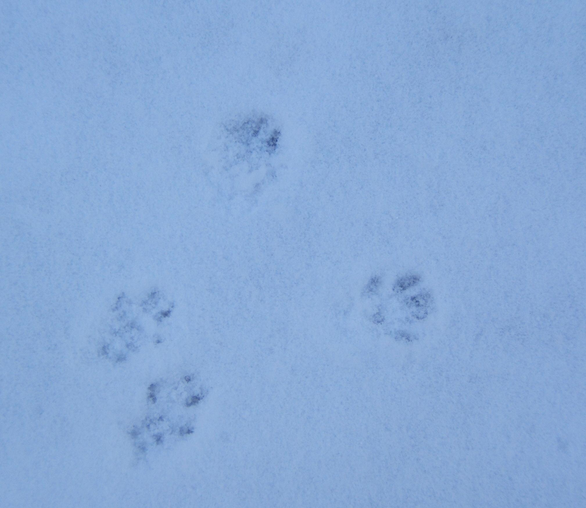 A Moment Of Beautiful Tracks In The Snow Nichepoetryandprose