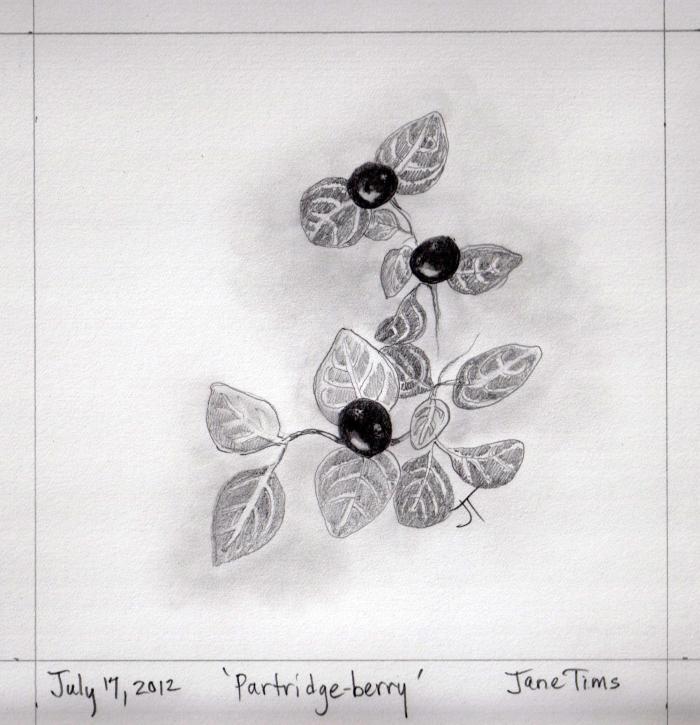 'Partridge-berry'