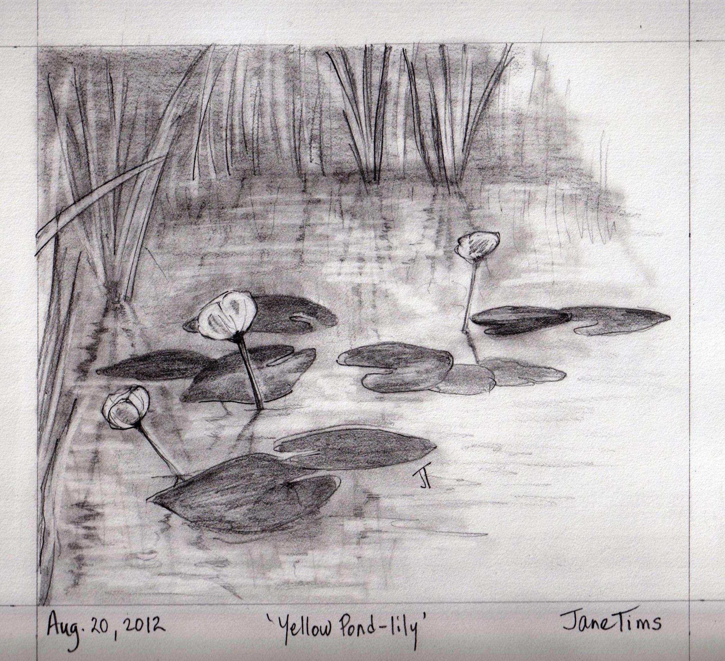 Ponds And Pond Lilies Nichepoetryandprose