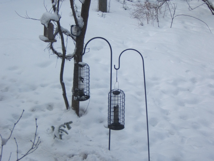 feeders in front yard