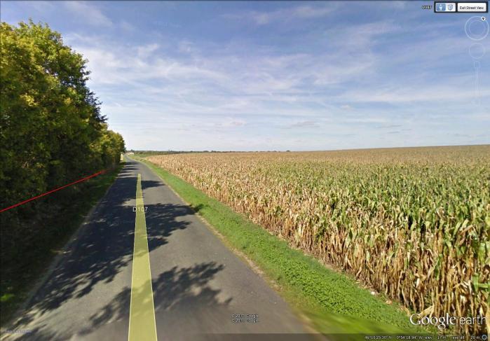 huge cornfield