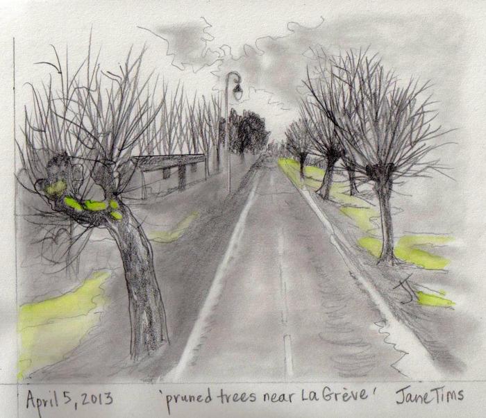 'pruned trees near La Greve'