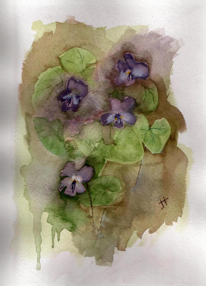 'purple violets'