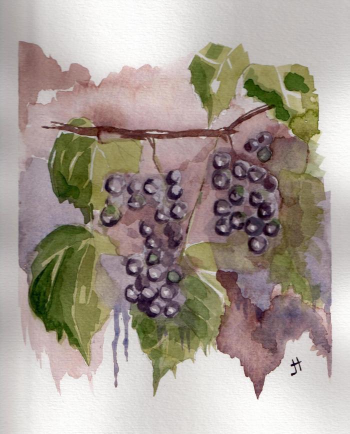'grapes'