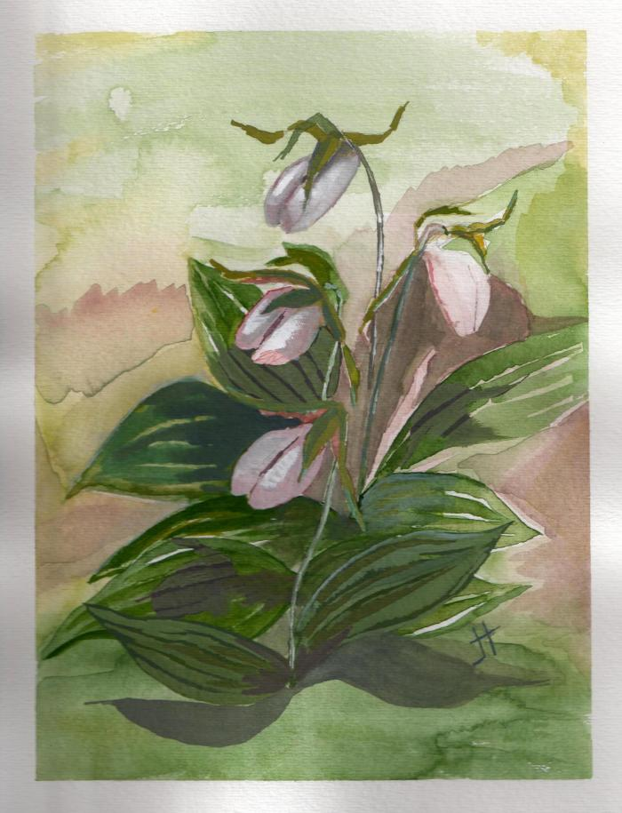 'Lady's Slippers'