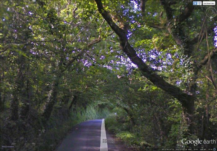 7-37 tree tunnel