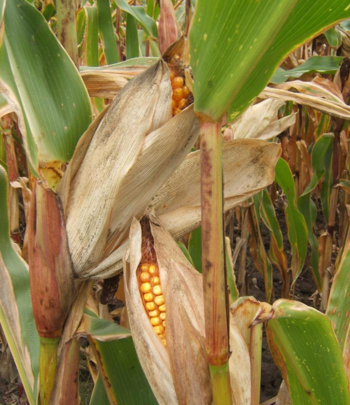 DSCF3497_crop