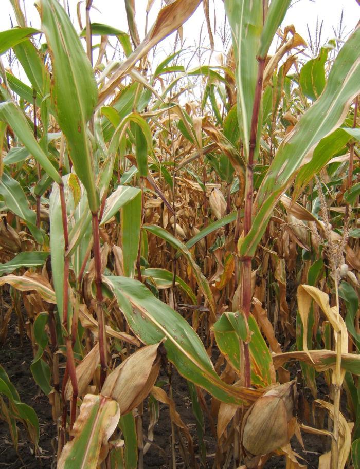 DSCF3503_crop