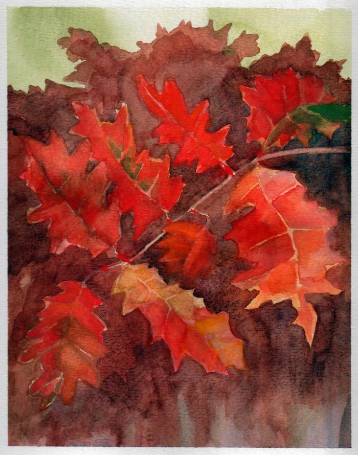 October 12, 2013  'Oak leaves'  Jane Tims