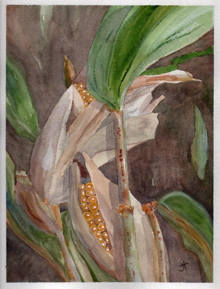 October 28, 2013  'September corn'   Jane Tims