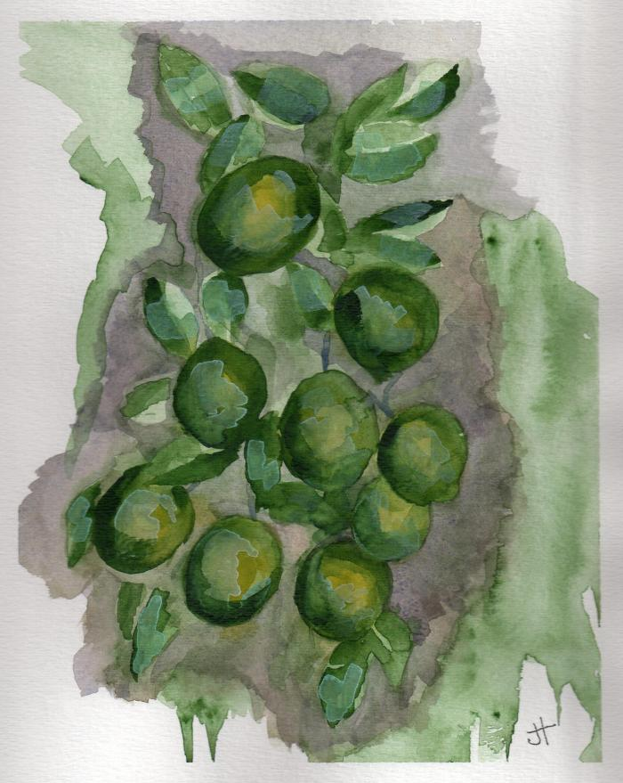 November 15, 2013  'loaded with limes'   Jane Tims