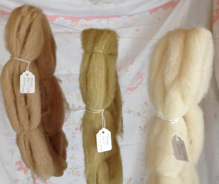 three shanks of wool, dyed with the lichen Usnea (left), dyed with Tansy (center) and raw wool (treated with alum)