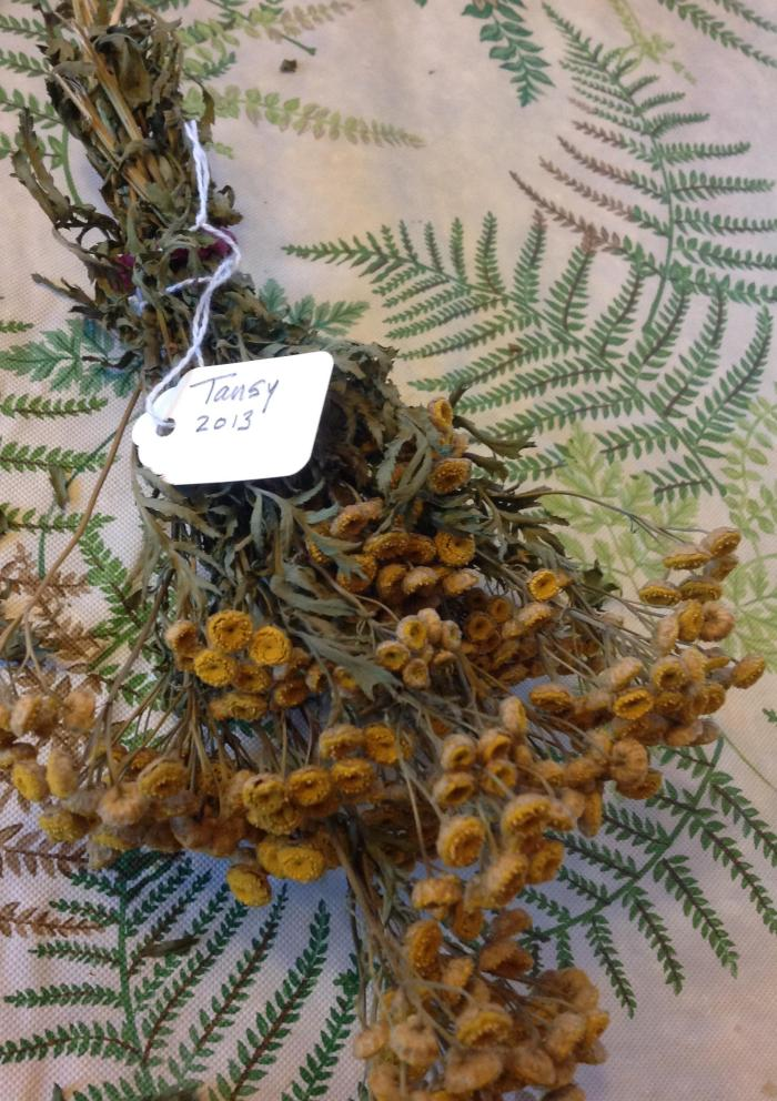 dried Tansy, collected in 2013
