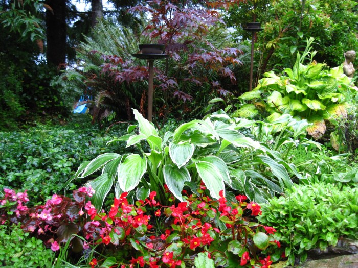Guenette - Begonia and Hostas