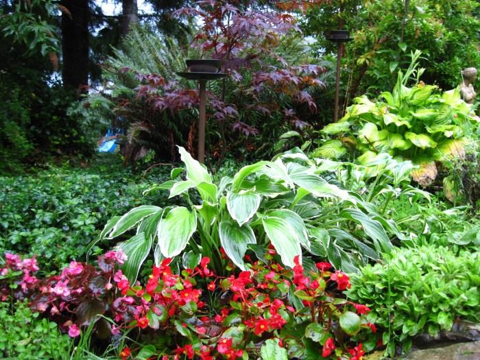 Guenette - Begonia and Hostas