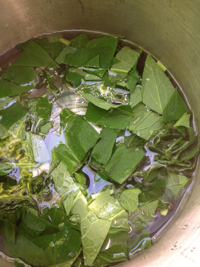 Comfrey leaves in water, cut up and ready for the boil