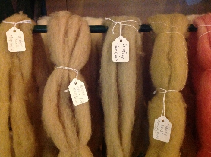 various dyes on wool roving (left to right): Alder bark, Old Man's Beard lichen, Comfrey, Tansy and a glimpse of Beet