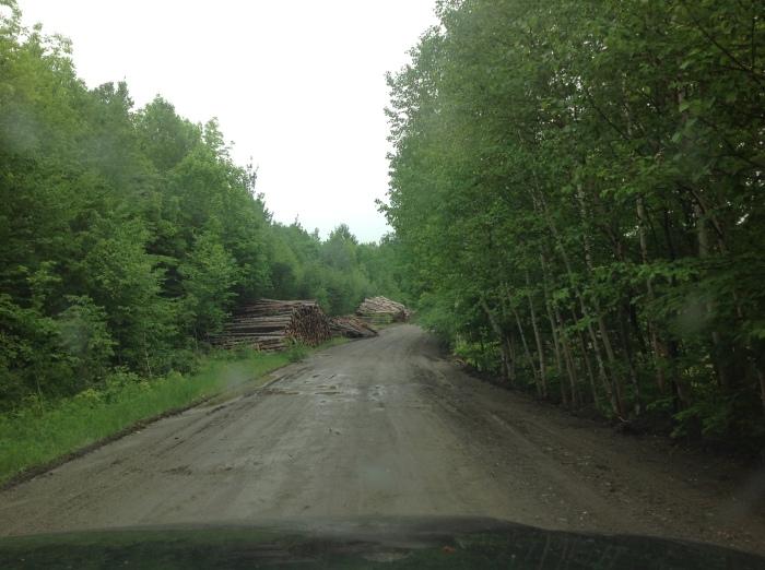 forest harvesting operation