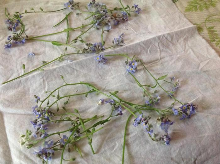 Forget-me-nots on cotton