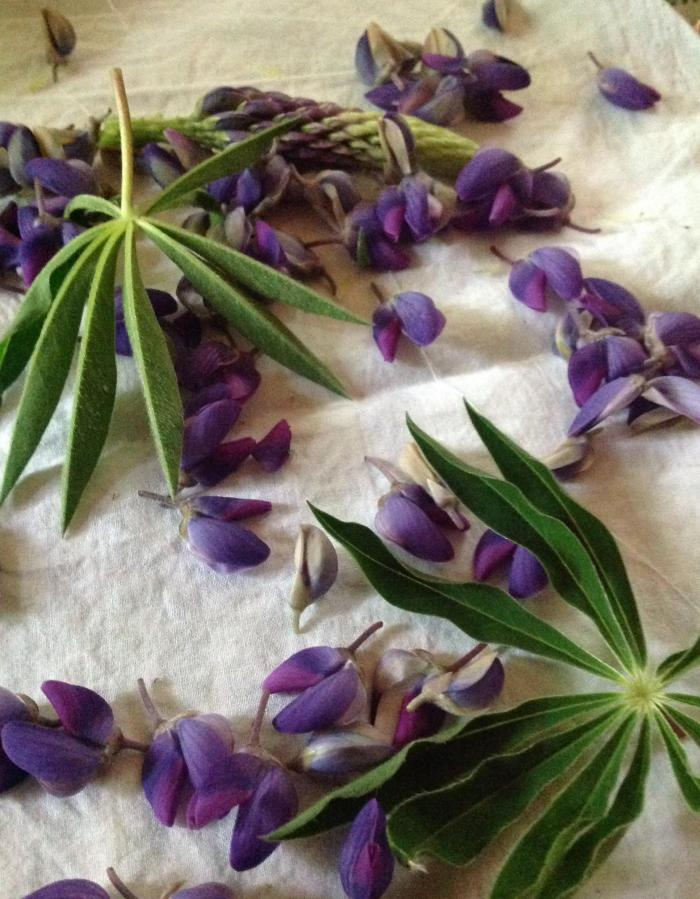 Lupin petals and leaves on cotton