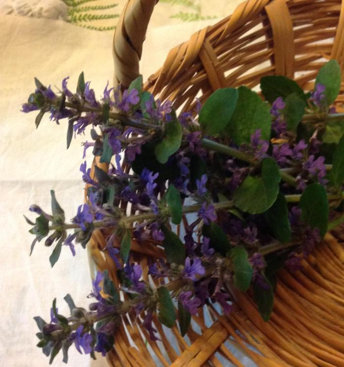 basket of Bugleweed