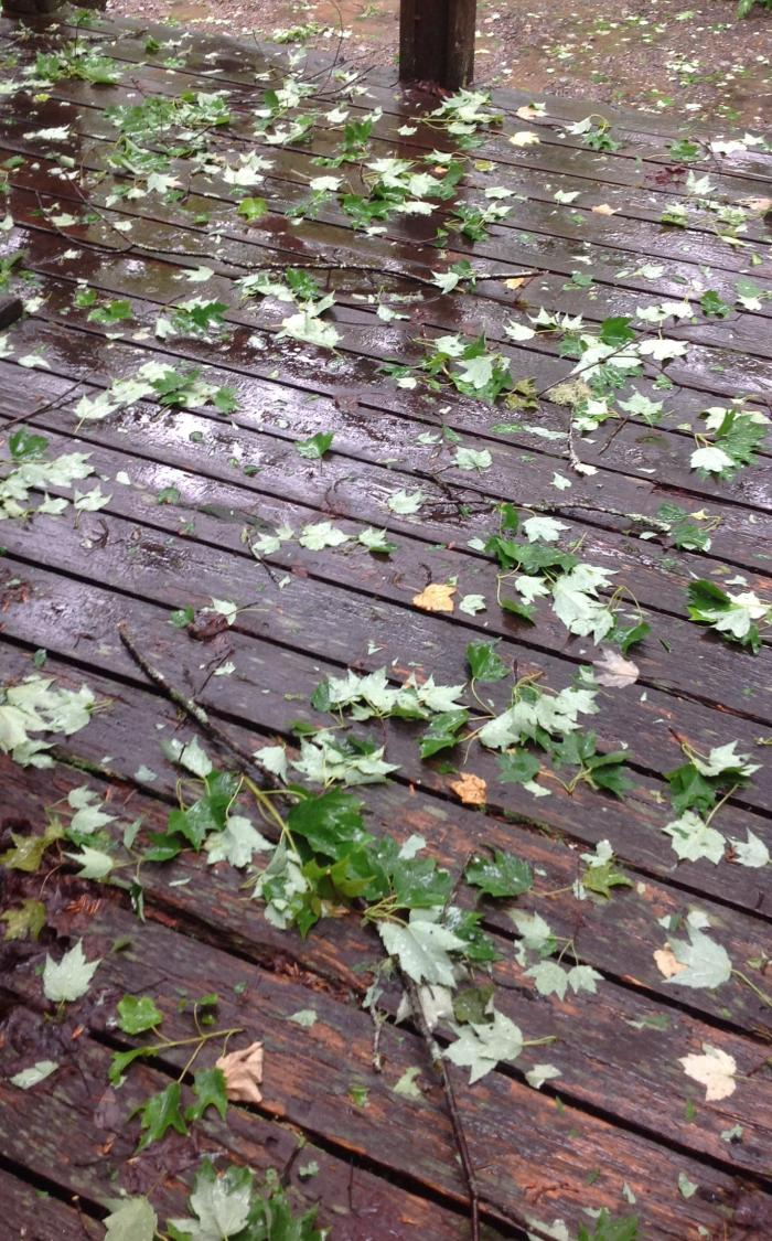 bunches of leaves on the deck