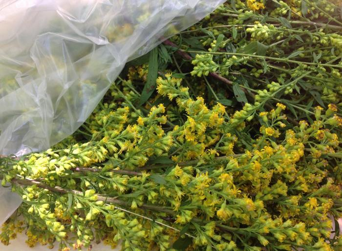 a bag of Goldenrod took no time at all to collect