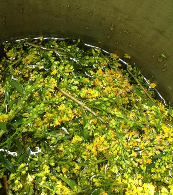 Goldenrod added to the dyepot