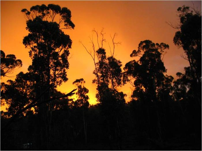 5. Dawn forest scape at the 2009 Australian Rogaining Championships held at Wandering, Western Australia.  A memorable navigation challenge!