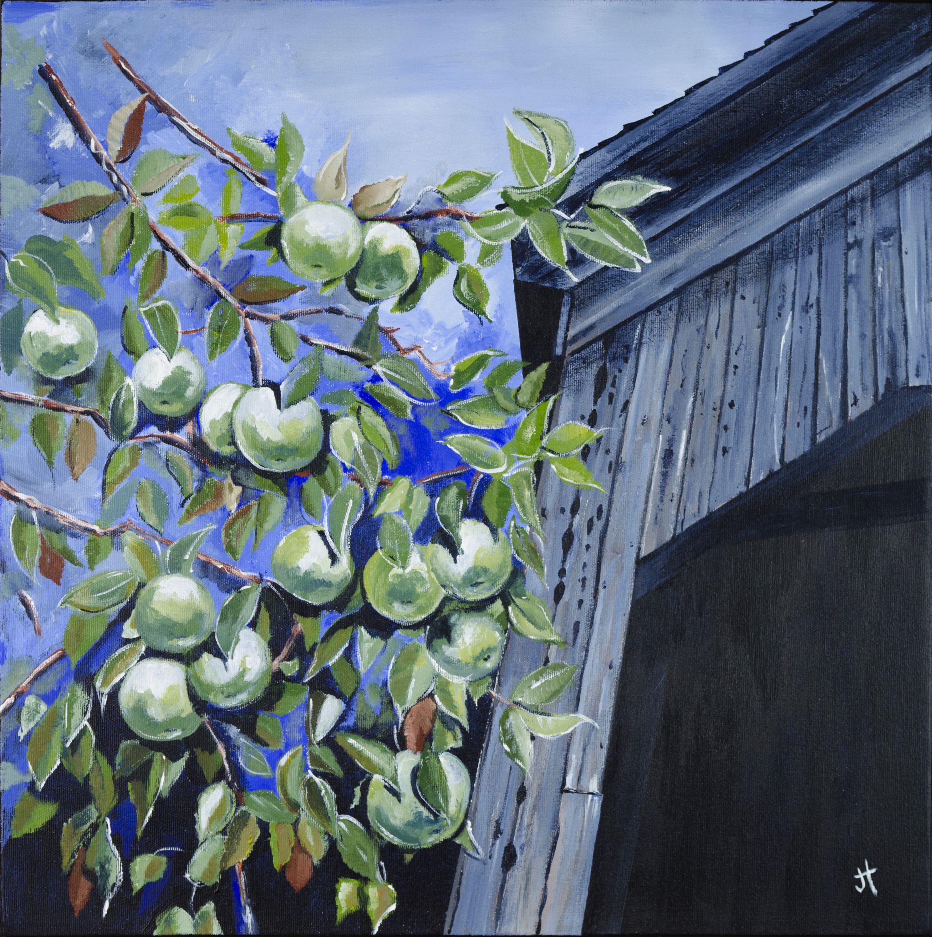 apples, Malone Bridge.jpg