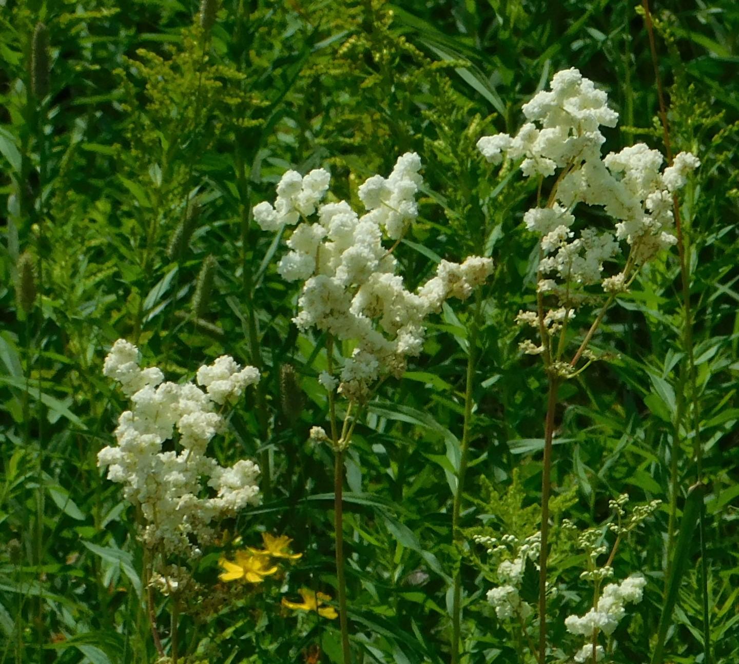 DSCN0624 flowers.jpg