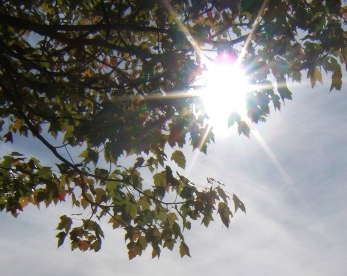 sun on tree