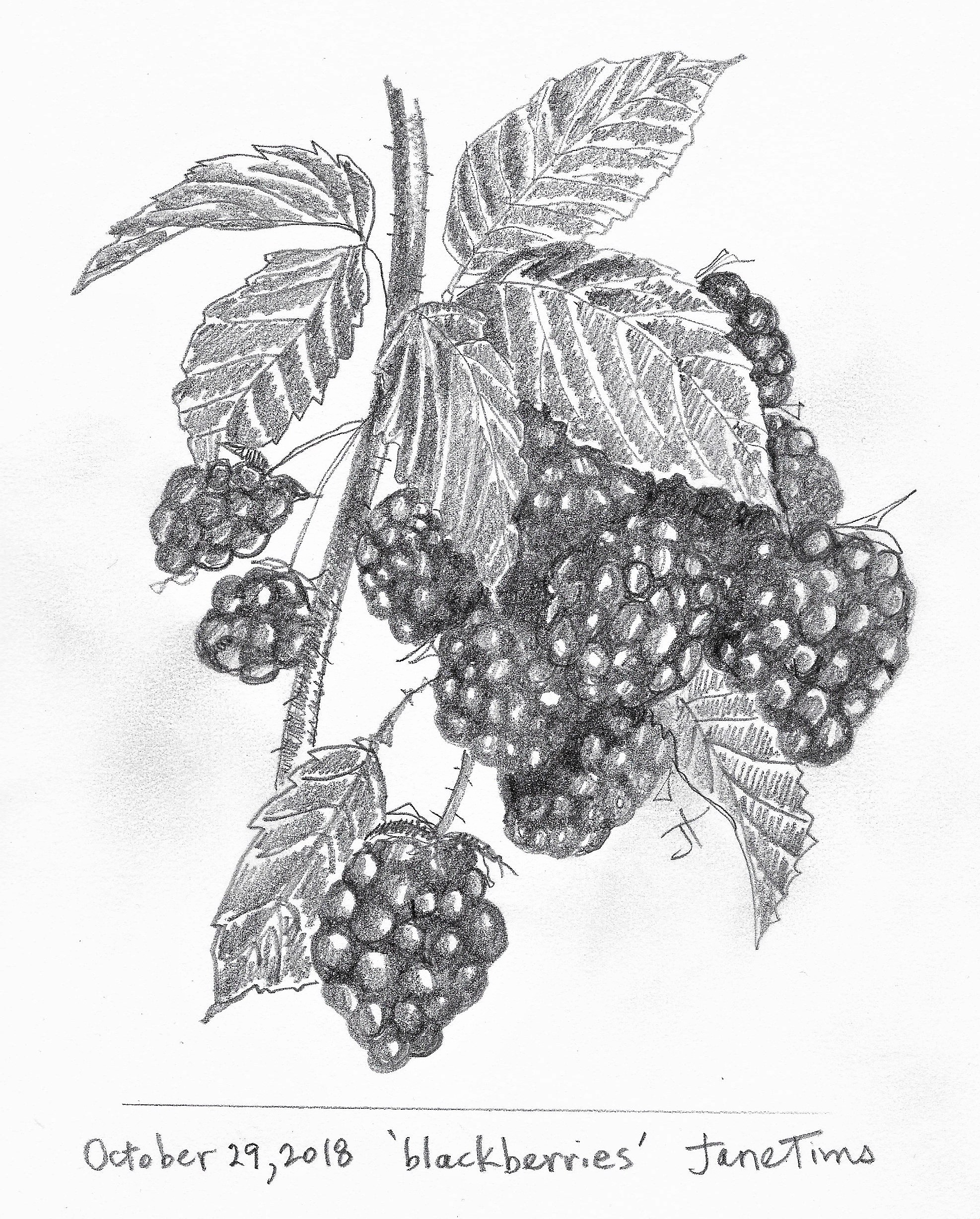 R. 'blackberries' October 29 2018 Jane TimsScan_20181029